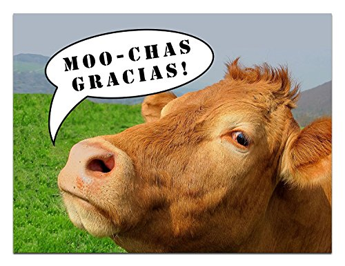 "Max Emporium - Thank You Cards - Cow - Humor - Moochas Gracias - Blank on the Inside - Includes Cards and Envelopes - 5.5"" x 4.25"" (12 Pack)"