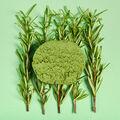 Lush - Herbalism